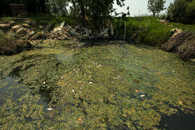 با برداشت بیرویه آب از آب بندان سطح اکسیژن آب کاهش میابد و موجب مرگ بسیاری از ماهیانی شده است که به طوری منبع تغذیه پرندگان این آب بندان بوده اند.