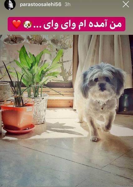 حیوان خانگی پرستو صالحی+عکس