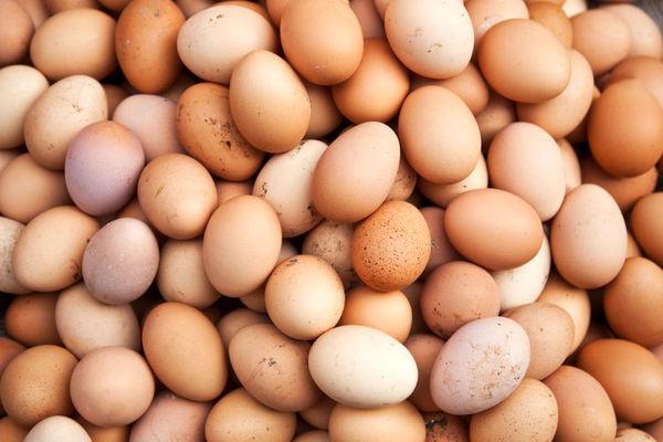فراخوانی200 میلیون تخممرغ در آمریکا به علت ریسک سالمونلا