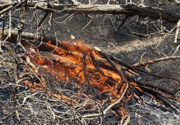 مرگ تدریجی جنگلهای زاگرس در سایه غفلت انسانها