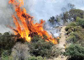 محکومیت 10 ساله در انتظارمسببان آتش سوزی جنگل ها