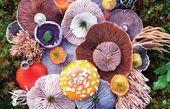 کاشت قارچ ها شبیه به دسته گل های رنگارنگ! + عکس