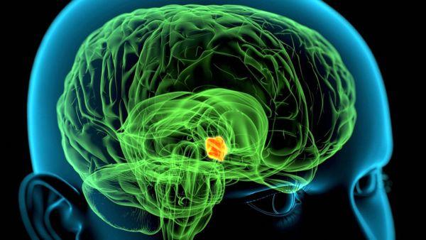 تومورهای غدهی هیپوتالاموس   علائم و روشهای درمانی