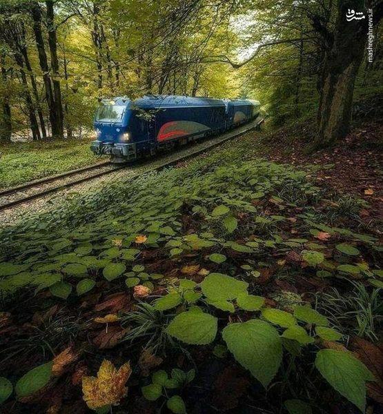 تصویری دیدنی از طبیعت بکر راهآهن شهر شیرگاه