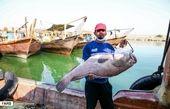 ماهی هامور بزرگ در دستان صیاد + عکس