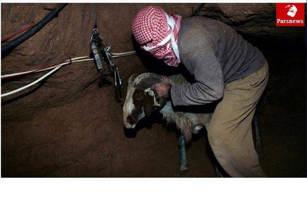 ناپدید شدن چهار کارگر فلسطینی در تونلی در مرز غزه