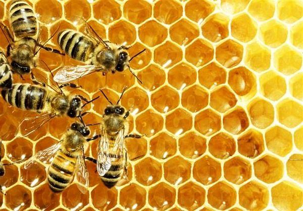 عسل؛ معجونی که خواص آن شما را از پزشک بی نیاز میکند