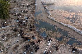 تصاویری دردناک از مازندران بی آب !