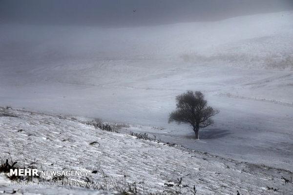 برف در ارتفاعات تهران