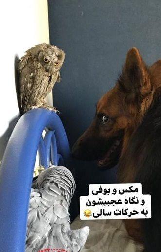 حیوانات عجیب غریب خانگی نفیسه روشن+عکس
