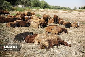 تلف شدن حیوانات بیچاره بر اثر خشکی زاینده رود + تصاویر