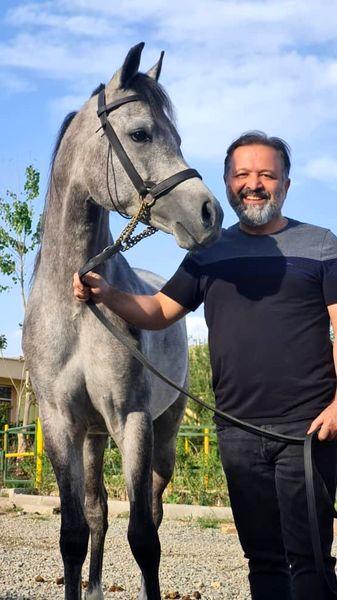 اسب زیبای داماد بدشانس + عکس