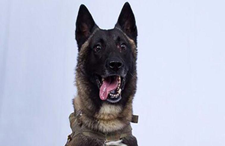تشکر عجیب ترامپ از سگی که در عملیات حمله به بغدادی شرکت داشت + فیلم