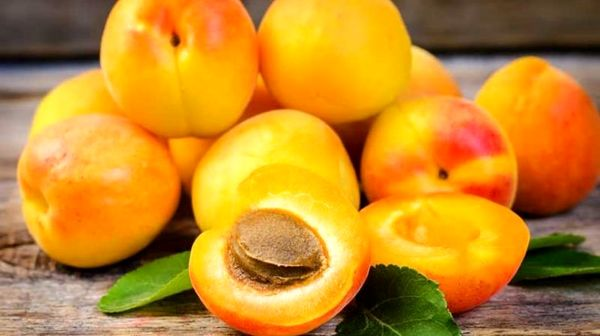 مرگ 100 درصدی انسان با خوردن هسته خوشمزه این میوه !