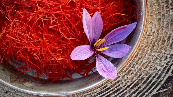 افزایش بیش از دوهزار هکتاری سطح زیر کشت زعفران