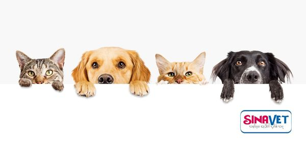 آیا شما سرپرست، حامی یا دوستدار حیوانات هستید؟ سیناوت همراه شماست.