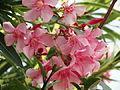 گیاهی زیبا که باعث ایست قلبی می شود