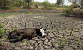 بیابان زایی در کمین گلستان سرسبز ایران/ سدها تبدیل به حوضچه های تبخیر شده اند