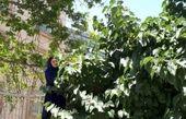 همسر علی معلم روی دیوار مشغول خوردن شاه توت! + عکس